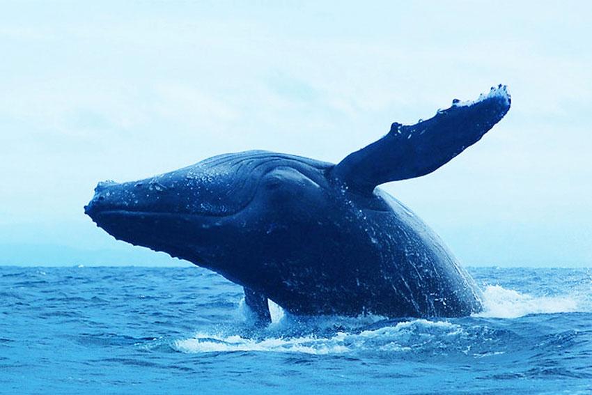 Safari baleines sainte marie madagascar - Masoandro Lodge